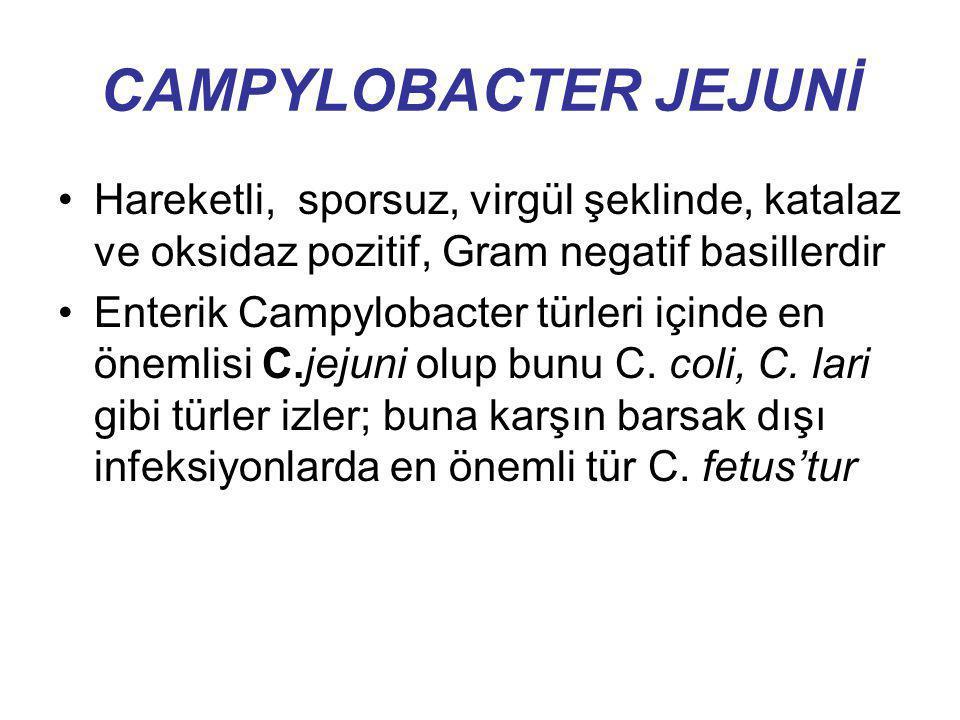 CAMPYLOBACTER JEJUNİ Hareketli, sporsuz, virgül şeklinde, katalaz ve oksidaz pozitif, Gram negatif basillerdir Enterik Campylobacter türleri içinde en
