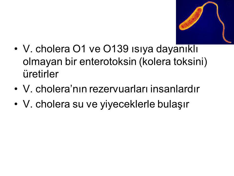 V. cholera O1 ve O139 ısıya dayanıklı olmayan bir enterotoksin (kolera toksini) üretirler V. cholera'nın rezervuarları insanlardır V. cholera su ve yi
