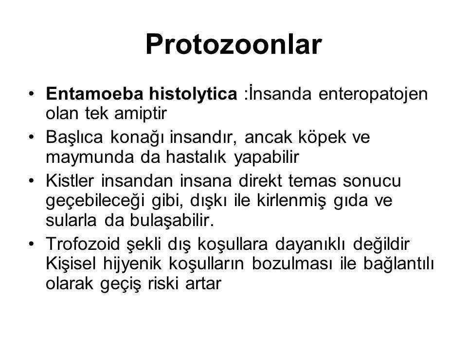 Protozoonlar Entamoeba histolytica :İnsanda enteropatojen olan tek amiptir Başlıca konağı insandır, ancak köpek ve maymunda da hastalık yapabilir Kist
