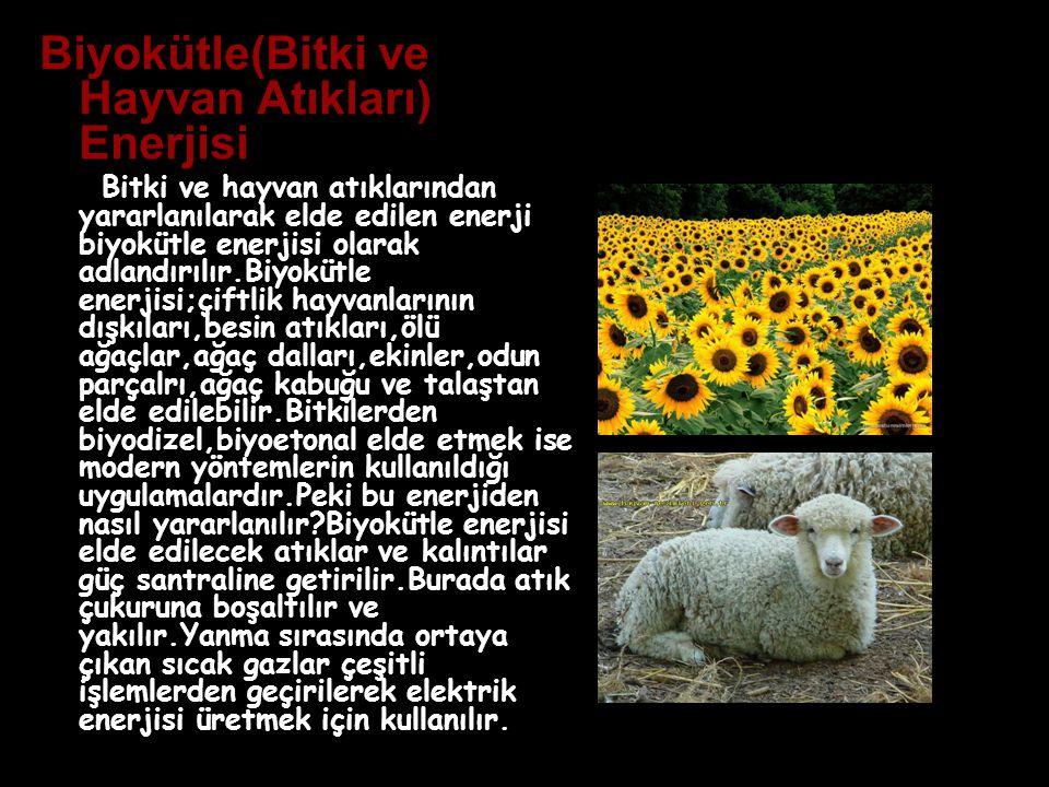 Biyokütle(Bitki ve Hayvan Atıkları) Enerjisi Bitki ve hayvan atıklarından yararlanılarak elde edilen enerji biyokütle enerjisi olarak adlandırılır.Biy