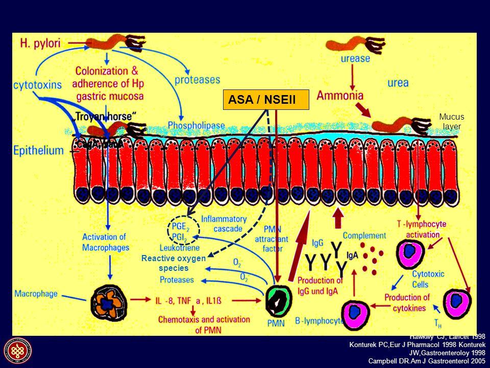 NSAEİ kullanan peptik ülserli ve Hp + hastalarda bakteri eradikasyonu ülser iyileşme süresini anlamlı olarak uzatmaktadır. Hawkwy CJ, Lancet 1998 Kont