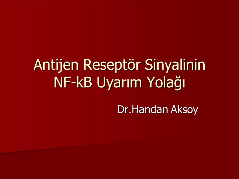 Antijen Reseptör Sinyalinin NF-kB Uyarım Yolağı Dr.Handan Aksoy Dr.Handan Aksoy