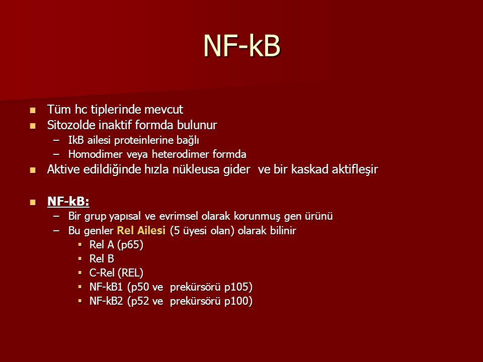NF-kB Tüm hc tiplerinde mevcut Tüm hc tiplerinde mevcut Sitozolde inaktif formda bulunur Sitozolde inaktif formda bulunur –IkB ailesi proteinlerine ba