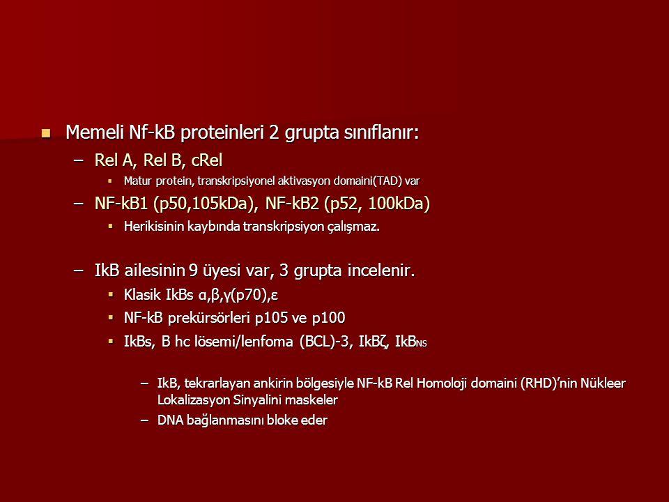 Memeli Nf-kB proteinleri 2 grupta sınıflanır: Memeli Nf-kB proteinleri 2 grupta sınıflanır: –Rel A, Rel B, cRel  Matur protein, transkripsiyonel akti