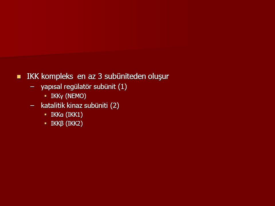IKK kompleks en az 3 subüniteden oluşur IKK kompleks en az 3 subüniteden oluşur – yapısal regülatör subünit (1)  IKKγ (NEMO) – katalitik kinaz subüni