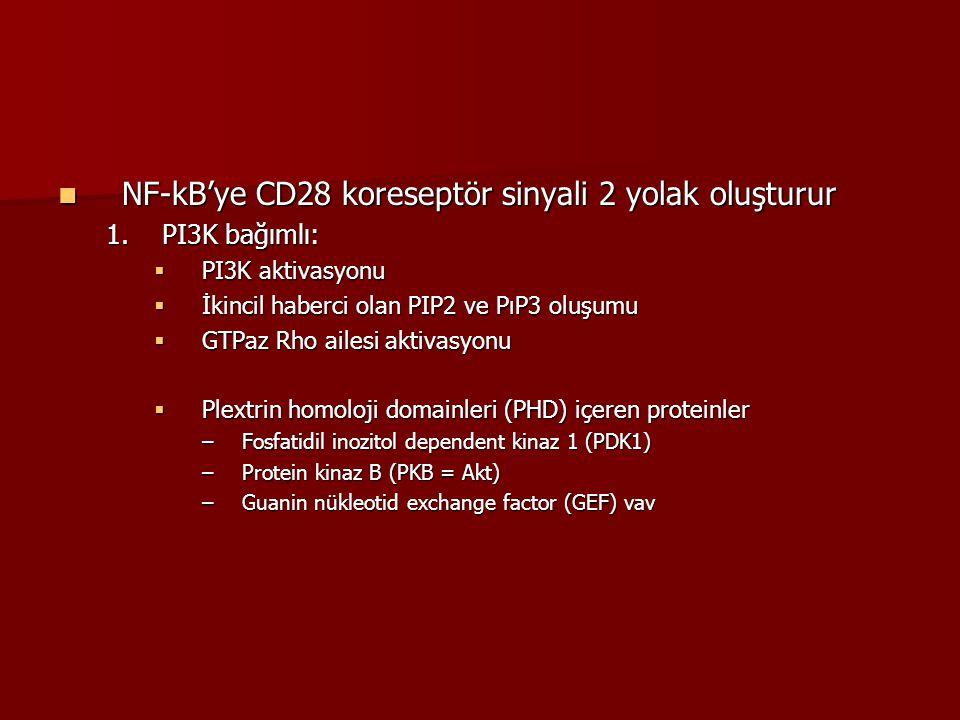 NF-kB'ye CD28 koreseptör sinyali 2 yolak oluşturur NF-kB'ye CD28 koreseptör sinyali 2 yolak oluşturur 1.PI3K bağımlı:  PI3K aktivasyonu  İkincil hab