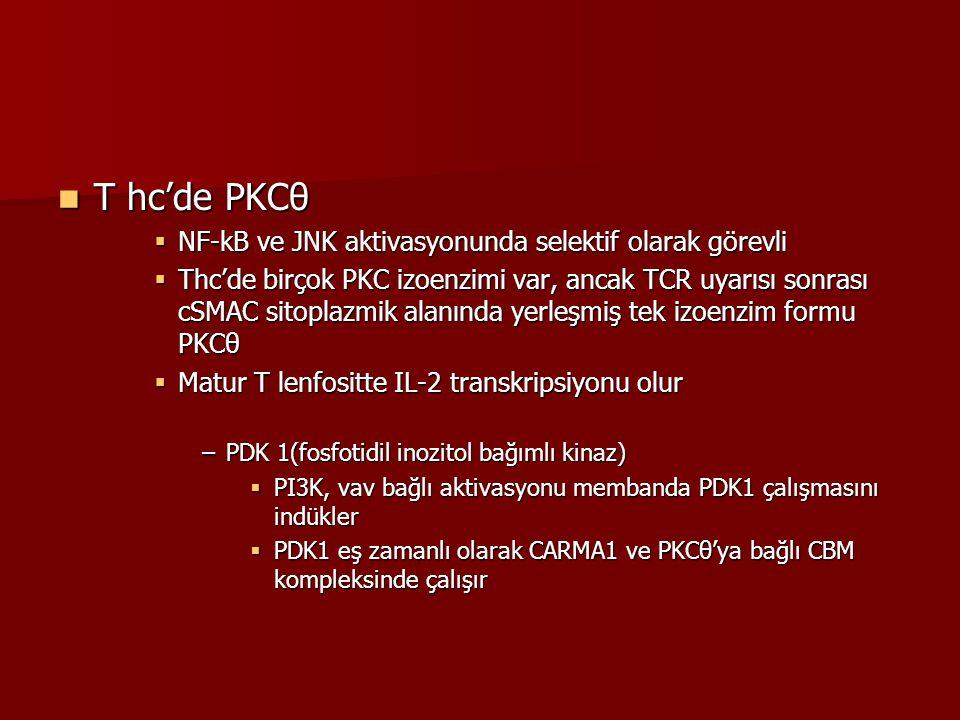 T hc'de PKCθ T hc'de PKCθ  NF-kB ve JNK aktivasyonunda selektif olarak görevli  Thc'de birçok PKC izoenzimi var, ancak TCR uyarısı sonrası cSMAC sit