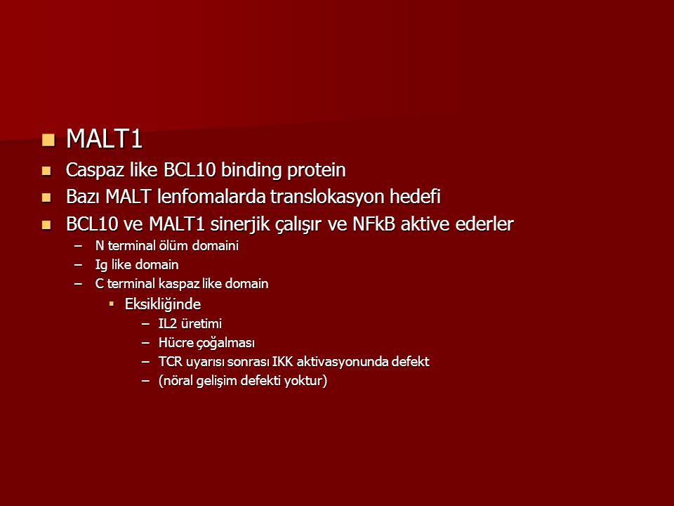 MALT1 MALT1 Caspaz like BCL10 binding protein Caspaz like BCL10 binding protein Bazı MALT lenfomalarda translokasyon hedefi Bazı MALT lenfomalarda tra