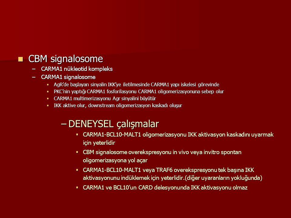 CBM signalosome CBM signalosome –CARMA1 nükleotid kompleks –CARMA1 signalosome  AgR'de başlayan sinyalin IKK'ye iletilmesinde CARMA1 yapı iskelesi gö