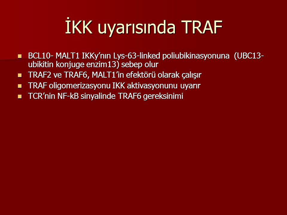 İKK uyarısında TRAF BCL10- MALT1 IKKy'nın Lys-63-linked poliubikinasyonuna (UBC13- ubikitin konjuge enzim13) sebep olur BCL10- MALT1 IKKy'nın Lys-63-l