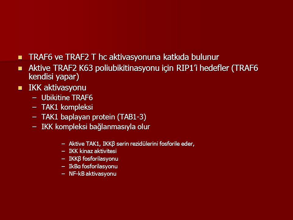 TRAF6 ve TRAF2 T hc aktivasyonuna katkıda bulunur TRAF6 ve TRAF2 T hc aktivasyonuna katkıda bulunur Aktive TRAF2 K63 poliubikitinasyonu için RIP1'i he