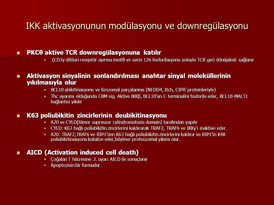 IKK aktivasyonunun modülasyonu ve downregülasyonu PKCθ aktive TCR downregülasyonuna katılır PKCθ aktive TCR downregülasyonuna katılır  (CD3y dilösin