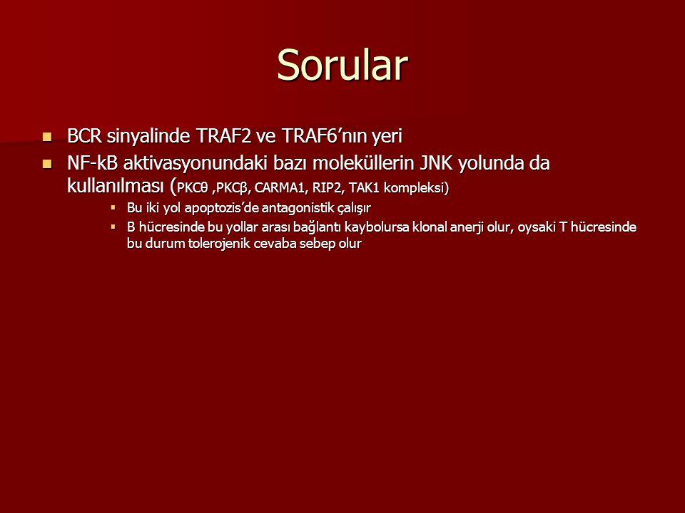 Sorular BCR sinyalinde TRAF2 ve TRAF6'nın yeri BCR sinyalinde TRAF2 ve TRAF6'nın yeri NF-kB aktivasyonundaki bazı moleküllerin JNK yolunda da kullanıl