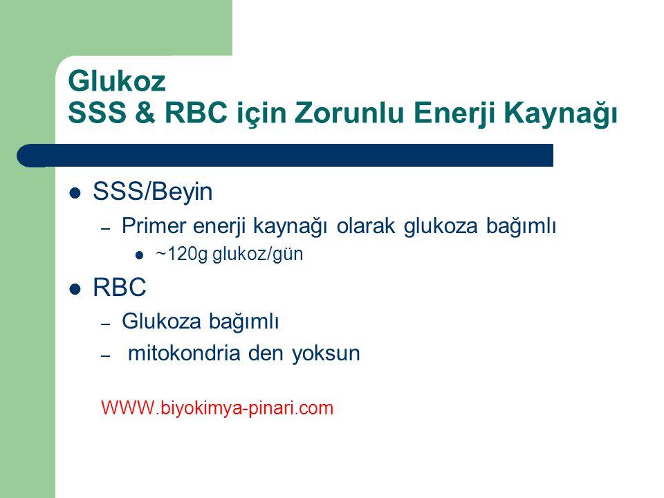 Glukoz SSS & RBC için Zorunlu Enerji Kaynağı SSS/Beyin – Primer enerji kaynağı olarak glukoza bağımlı ~120g glukoz/gün RBC – Glukoza bağımlı – mitokon