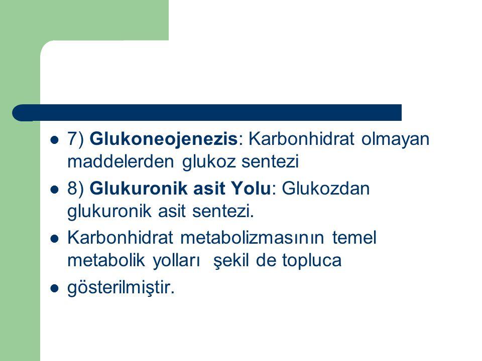 7) Glukoneojenezis: Karbonhidrat olmayan maddelerden glukoz sentezi 8) Glukuronik asit Yolu: Glukozdan glukuronik asit sentezi. Karbonhidrat metaboliz