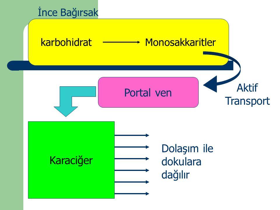 karbohidrat Monosakkaritler İnce Bağırsak Aktif Transport Karaciğer Portal ven Dolaşım ile dokulara dağılır