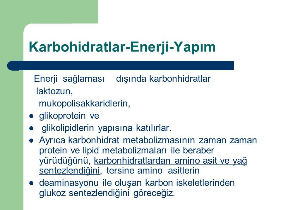 Karbohidratlar-Enerji-Yapım Enerji sağlaması dışında karbonhidratlar laktozun, mukopolisakkaridlerin, glikoprotein ve glikolipidlerin yapısına katılır