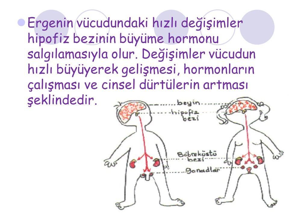 Ergenin vücudundaki hızlı değişimler hipofiz bezinin büyüme hormonu salgılamasıyla olur. Değişimler vücudun hızlı büyüyerek gelişmesi, hormonların çal