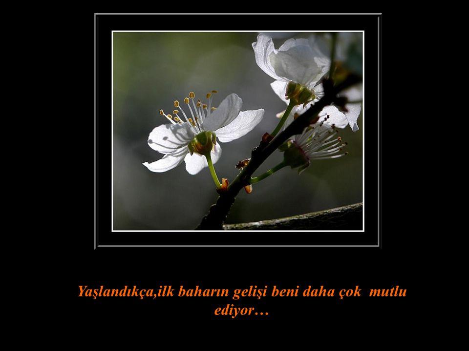 Gizli bahçe Richard Clayderman İlk bahar geldiğinde bir çiçeğe şöyle bir göz atınız,işte size mutlulukla dolu bir gün…