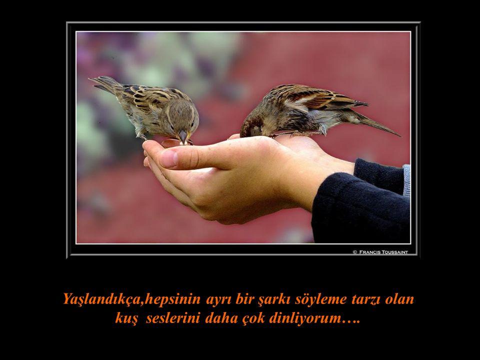 Yaşlandıkça,hepsinin ayrı bir şarkı söyleme tarzı olan kuş seslerini daha çok dinliyorum….