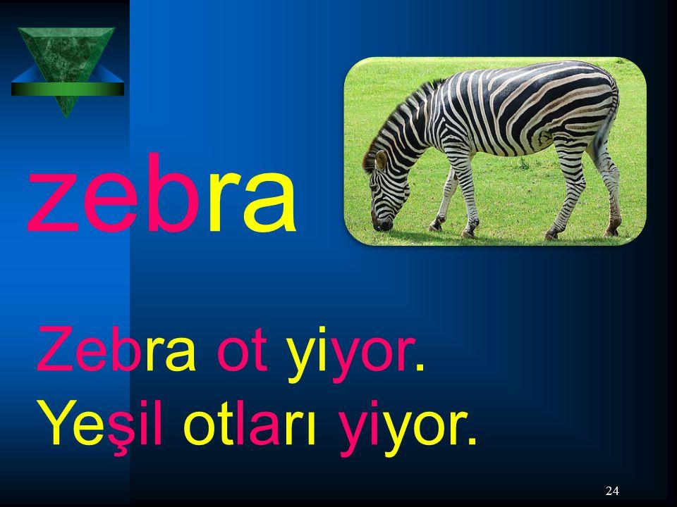 24 zebra Zebra ot yiyor. Yeşil otları yiyor.