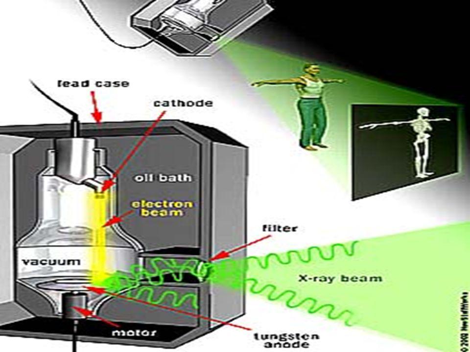 Teorik olarak, hızlı çoğalmanın olduğu organ ve dokular, radyasyona daha duyarlıdır.