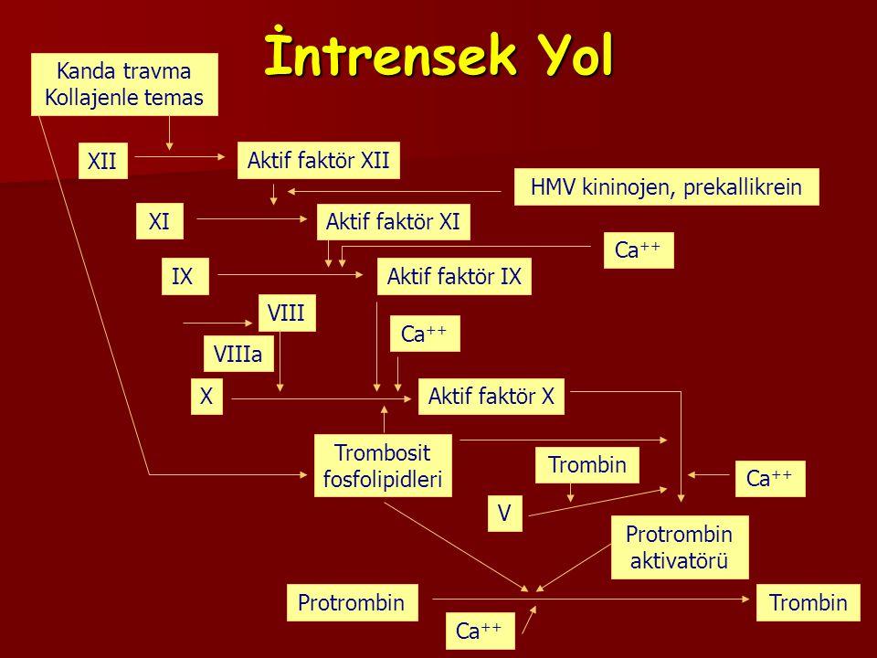 ORAL ANTİKOAGÜLANLAR (Warfarin) F II F II F VII F VII F IX F IX F X vitamin K bağımlı faktörleri F X vitamin K bağımlı faktörleri Protein C Protein C Protein S antikoagülan proteinleri inhibe eder Protein S antikoagülan proteinleri inhibe eder
