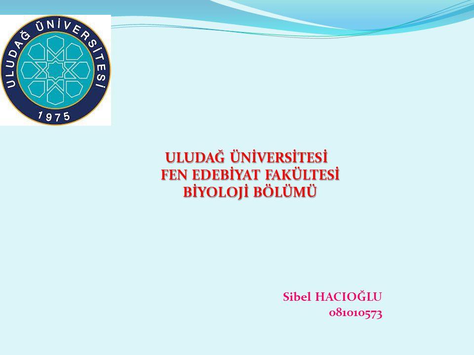 ULUDAĞ ÜNİVERSİTESİ ULUDAĞ ÜNİVERSİTESİ FEN EDEBİYAT FAKÜLTESİ FEN EDEBİYAT FAKÜLTESİ BİYOLOJİ BÖLÜMÜ BİYOLOJİ BÖLÜMÜ Sibel HACIOĞLU 081010573