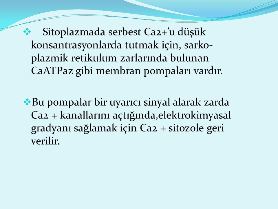  Sitoplazmada serbest Ca2+'u düşük konsantrasyonlarda tutmak için, sarko- plazmik retikulum zarlarında bulunan CaATPaz gibi membran pompaları vardır.