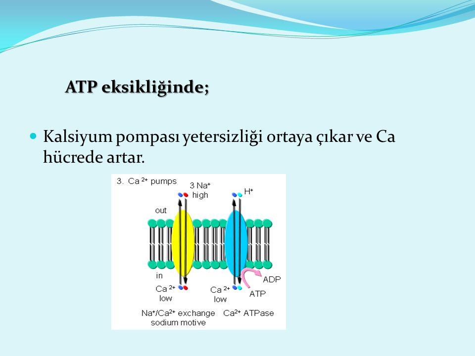 ATP eksikliğinde; ATP eksikliğinde; Kalsiyum pompası yetersizliği ortaya çıkar ve Ca hücrede artar.