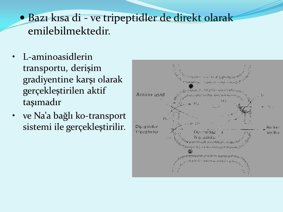 Bazı kısa di - ve tripeptidler de direkt olarak emilebilmektedir. L-aminoasidlerin transportu, derişim gradiyentine karşı olarak gerçekleştirilen akti