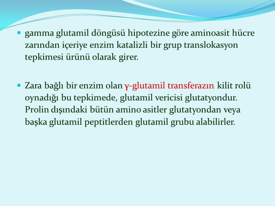 gamma glutamil döngüsü hipotezine göre aminoasit hücre zarından içeriye enzim katalizli bir grup translokasyon tepkimesi ürünü olarak girer. Zara bağl