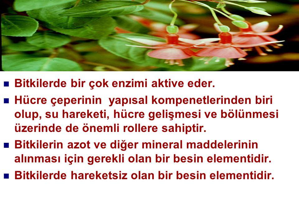 Aynı nedenle kalsiyum beslenmesi durumunu saptamak için bitki yapraklarının analiz edilmesi herhangi bir yarar sağlamamaktadır.