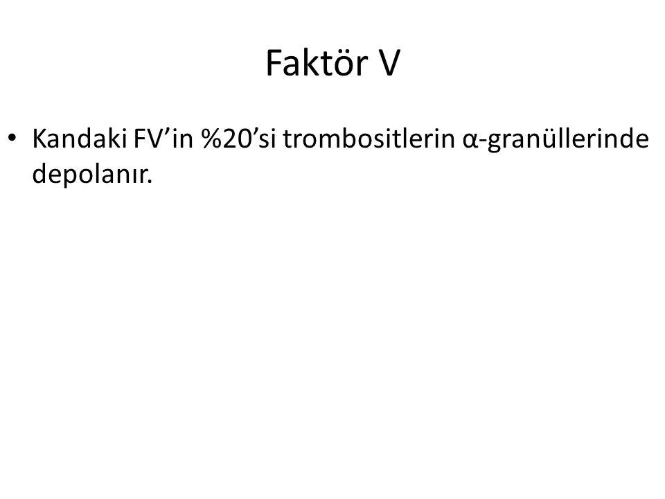 Faktör V Kandaki FV'in %20'si trombositlerin α-granüllerinde depolanır.