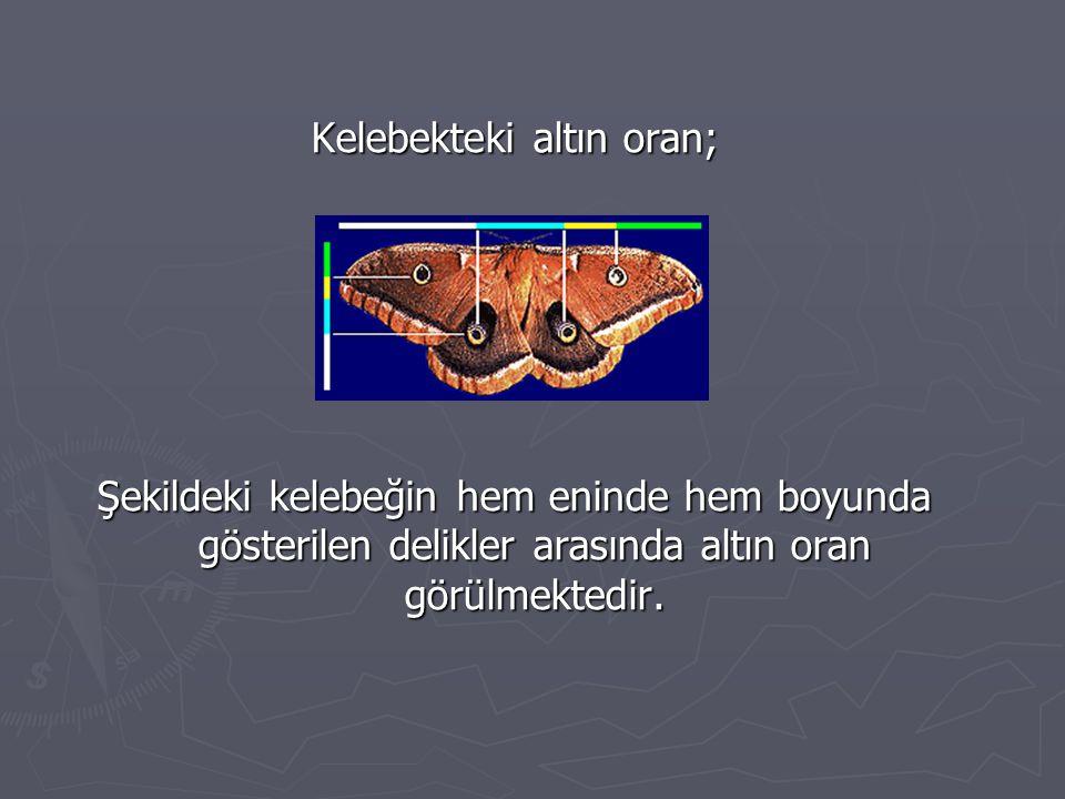 Kelebekteki altın oran; Şekildeki kelebeğin hem eninde hem boyunda gösterilen delikler arasında altın oran görülmektedir.