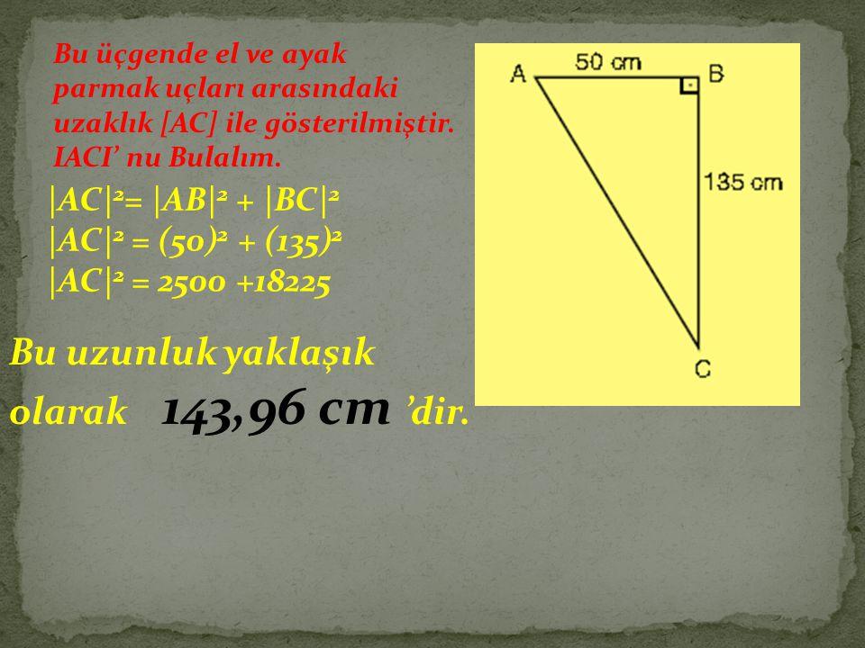 Bu üçgende el ve ayak parmak uçları arasındaki uzaklık [AC] ile gösterilmiştir. IACI' nu Bulalım. |AC| 2 = |AB| 2 + |BC| 2 |AC| 2 = (50) 2 + (135) 2 |
