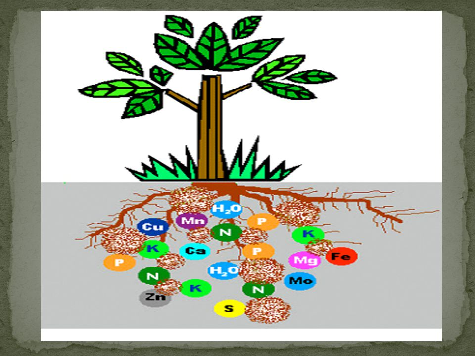 Bitkiler sodyumu Na+ iyonu şekline alırlar.