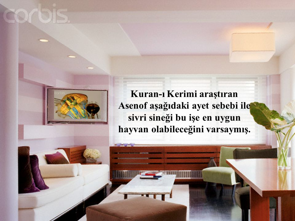 Kuran-ı Kerimi araştıran Asenof aşağıdaki ayet sebebi ile sivri sineği bu işe en uygun hayvan olabileceğini varsaymış.