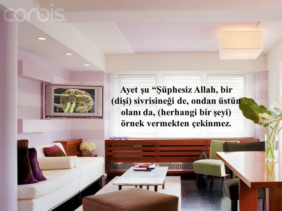 Ayet şu Şüphesiz Allah, bir (dişi) sivrisineği de, ondan üstün olanı da, (herhangi bir şeyi) örnek vermekten çekinmez.
