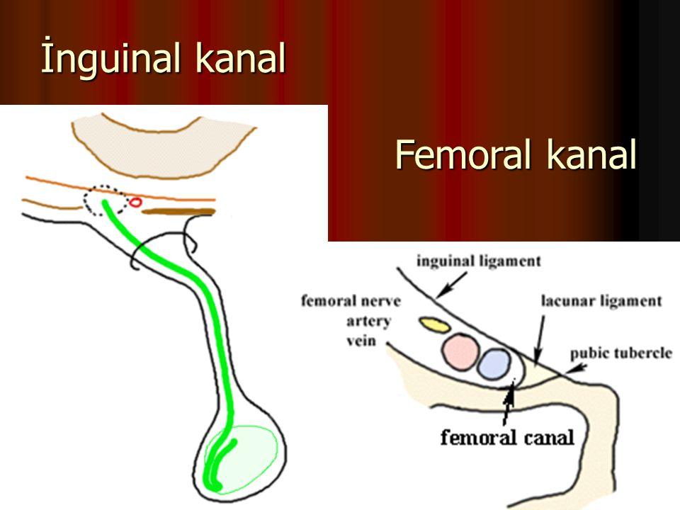 İnguinal kanal Femoral kanal