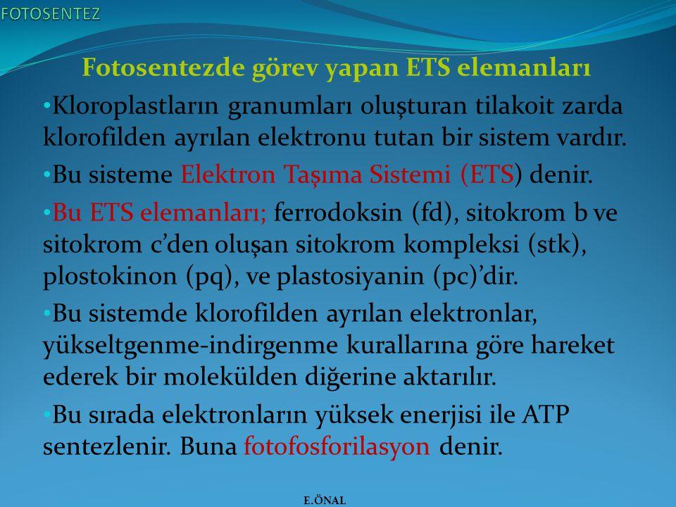Fotosentezde görev yapan ETS elemanları Kloroplastların granumları oluşturan tilakoit zarda klorofilden ayrılan elektronu tutan bir sistem vardır. Bu