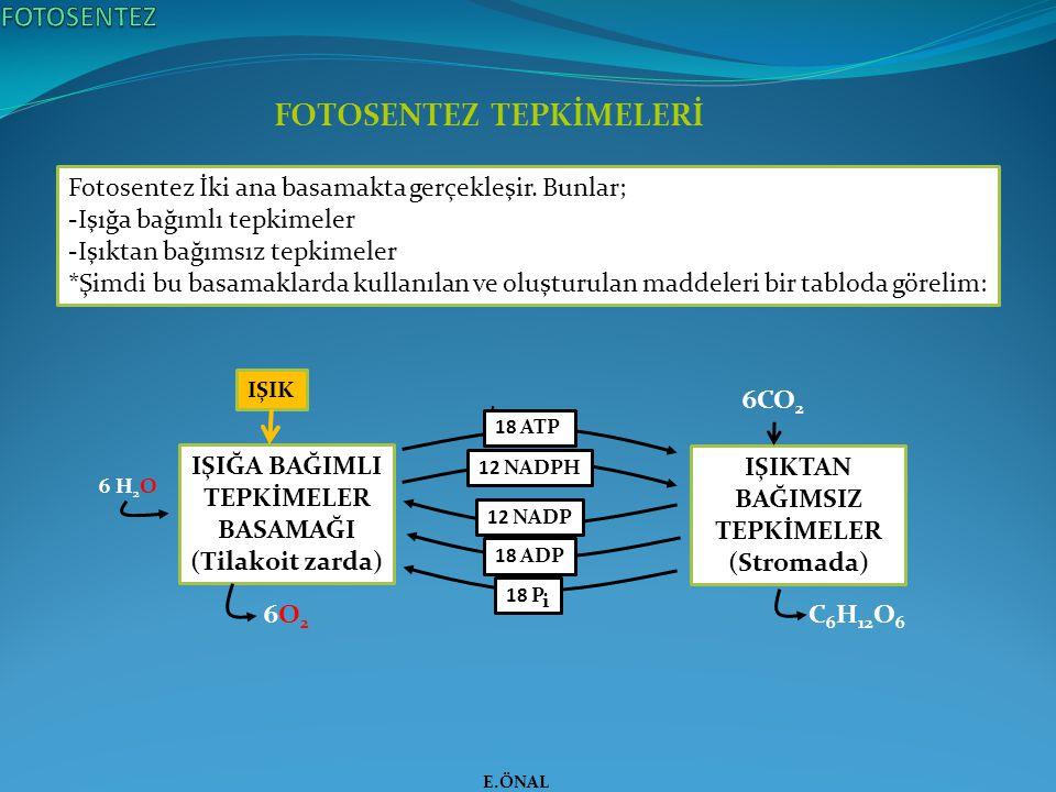 FOTOSENTEZ TEPKİMELERİ E.ÖNAL i IŞIĞA BAĞIMLI TEPKİMELER BASAMAĞI (Tilakoit zarda) IŞIKTAN BAĞIMSIZ TEPKİMELER (Stromada) 18 ATP 12 NADPH 12 NADP 18 A
