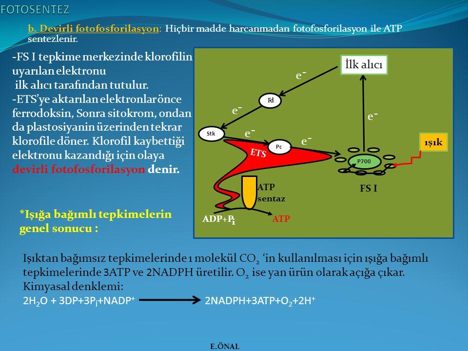 b. Devirli fotofosforilasyon: Hiçbir madde harcanmadan fotofosforilasyon ile ATP sentezlenir. E.ÖNAL Işıktan bağımsız tepkimelerinde 1 molekül CO 2 'i