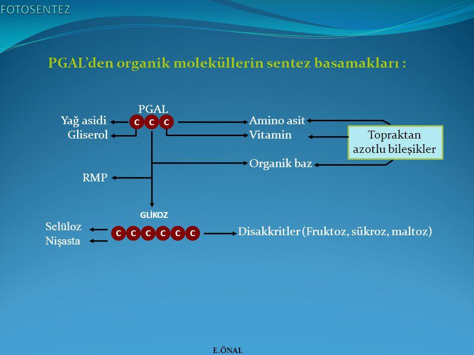PGAL'den organik moleküllerin sentez basamakları : E.ÖNAL PGAL GLİKOZ CCC CCC Yağ asidi Gliserol RMP Amino asit Vitamin Organik baz Topraktan azotlu b