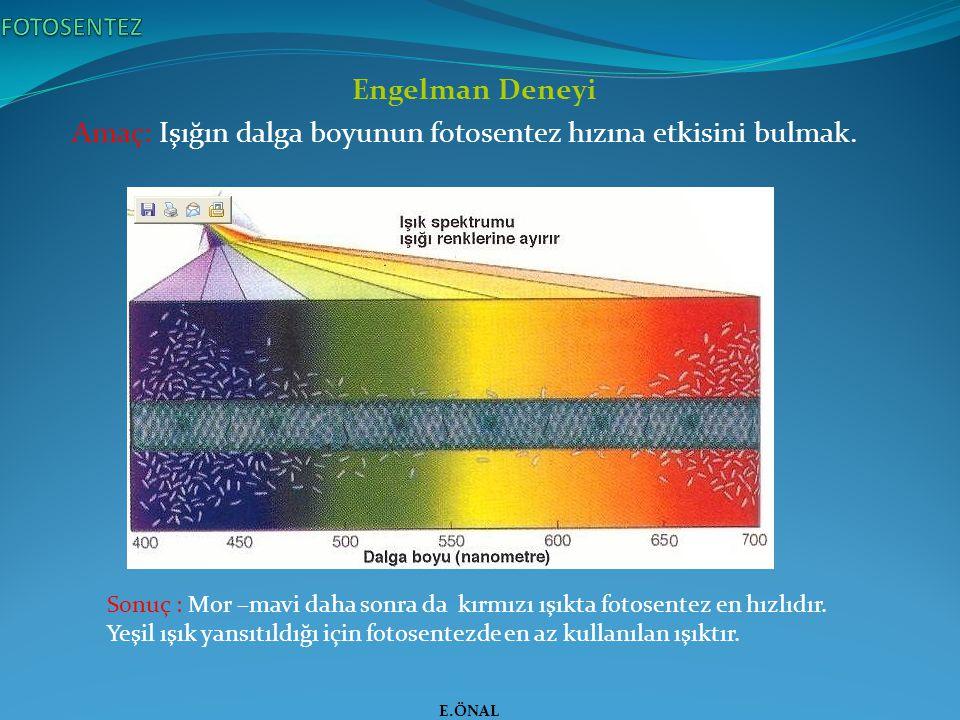 Engelman Deneyi Amaç: Işığın dalga boyunun fotosentez hızına etkisini bulmak. E.ÖNAL Sonuç : Mor –mavi daha sonra da kırmızı ışıkta fotosentez en hızl
