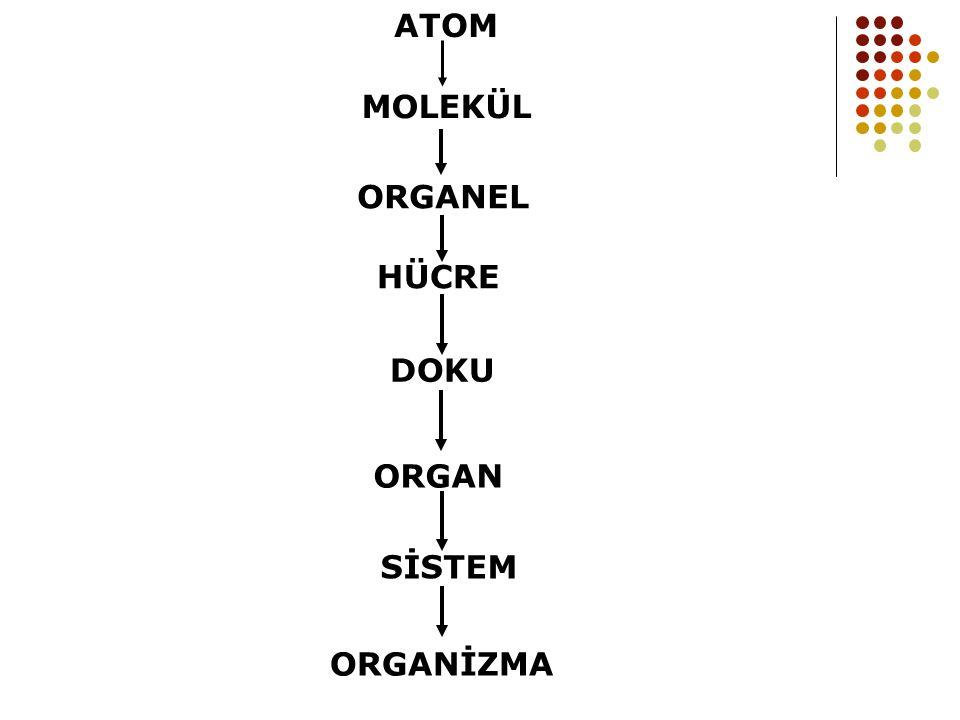 MOLEKÜL ORGANEL HÜCRE ORGAN ATOM ORGANİZMA SİSTEM DOKU
