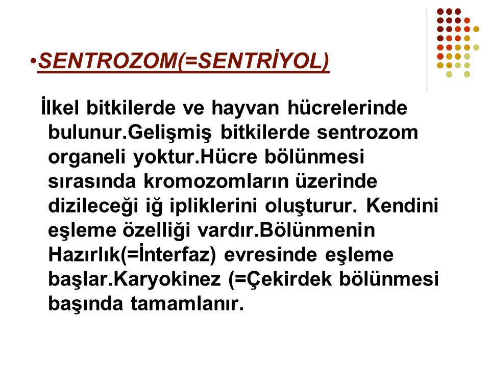 SENTROZOM(=SENTRİYOL) İlkel bitkilerde ve hayvan hücrelerinde bulunur.Gelişmiş bitkilerde sentrozom organeli yoktur.Hücre bölünmesi sırasında kromozom