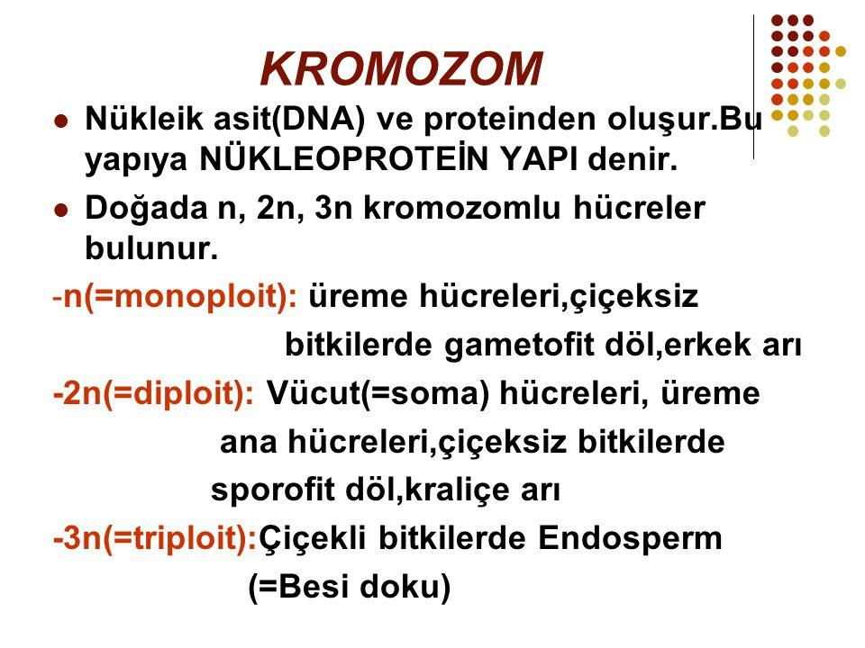 KROMOZOM Nükleik asit(DNA) ve proteinden oluşur.Bu yapıya NÜKLEOPROTEİN YAPI denir. Doğada n, 2n, 3n kromozomlu hücreler bulunur. - n(=monoploit): üre
