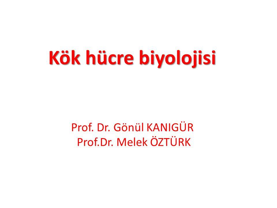 Kök hücre biyolojisi Kök hücre biyolojisi Prof. Dr. Gönül KANIGÜR Prof.Dr. Melek ÖZTÜRK