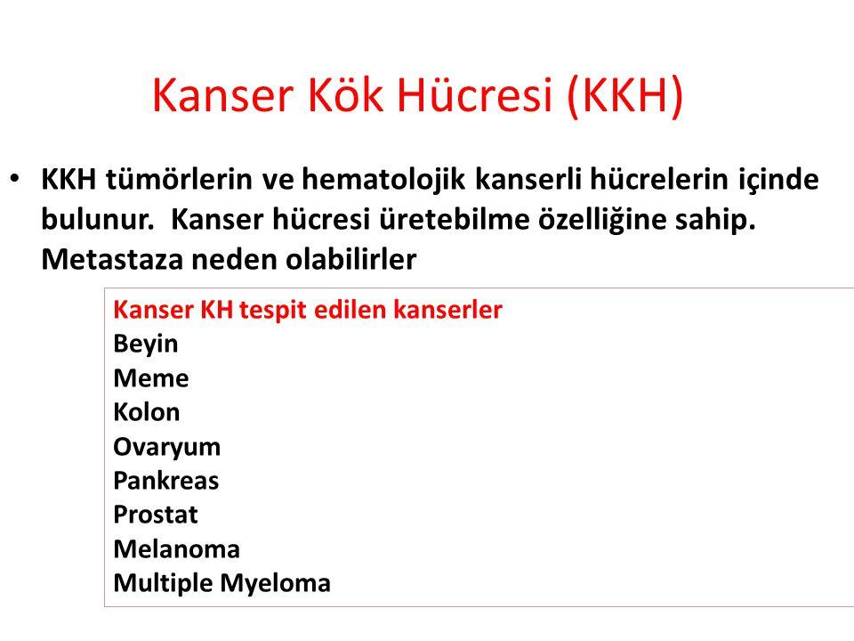 KKH tümörlerin ve hematolojik kanserli hücrelerin içinde bulunur. Kanser hücresi üretebilme özelliğine sahip. Metastaza neden olabilirler Kanser Kök H